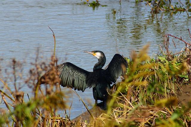 Animal, River, Waterside, Bird, Wild Birds, Waterfowl