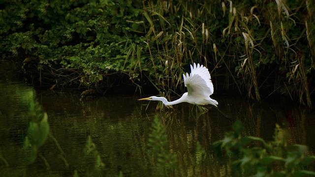 Animal, River, Waterside, Trees And Plants, Wild Birds