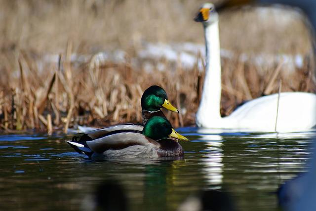 Animal, Lake, Waterside, Waterweed, Bird, Wild Birds