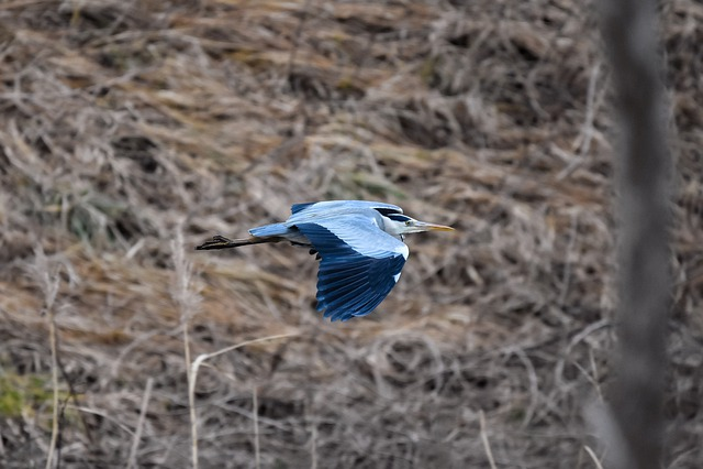 Animal, River, Waterweed, Bird, Wild Birds, Heron