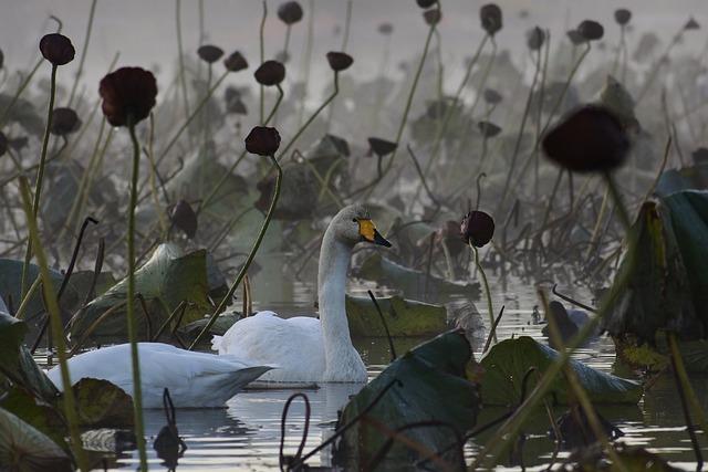 Animal, Morning, Fog, City, Pond, Waterweed, Waterside