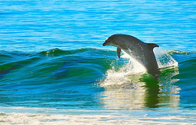 Dolphin, Ocean, Wave
