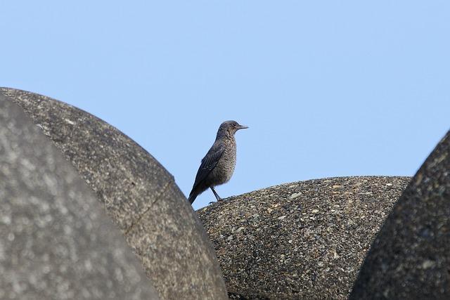 Animal, Beach, Wave Off Block, Little Bird