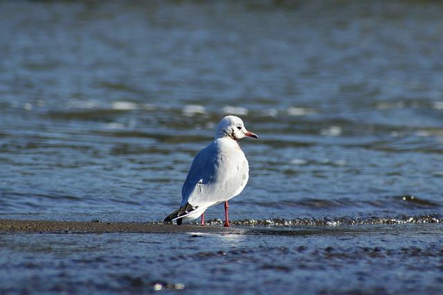 Animal, River, Sea, Wave, Beach, Bird, Wild Birds