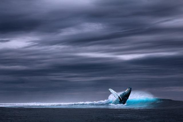Ocean, Blue Whale, Sea, Wave, Whale, Rainy, Wild