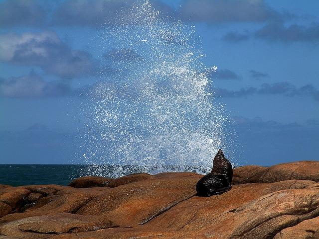 Sea Wolf, Sea, Splash, Waves, Stones, Nature, Horizon