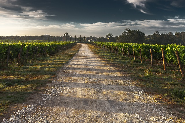 Road, Vineyard, Countryside, Way, Path, Country Lane