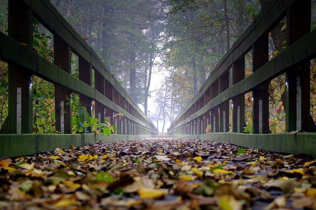Bridge, Wooden, The Fog, Foliage, Far Away, Way, Forest