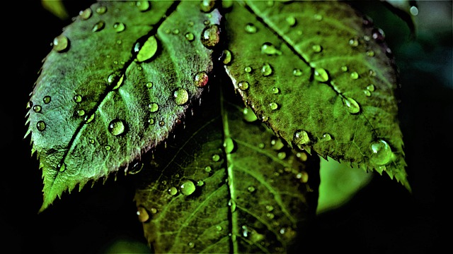 Leaves, Green, Chlorophyll, Rainy Weather, Weather