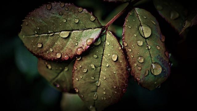 Rainy Weather, Leaves, Water, Wet, Weather, Rain
