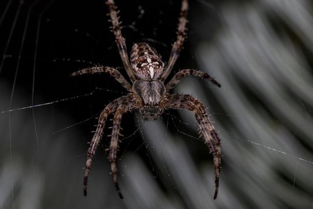 Spider, Araneus, Cobweb, Animal, Close Up, Web, Insect