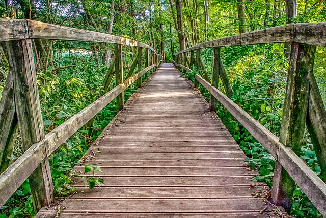 Nature, Architecture, Wooden Bridge, Boardwalk, Web