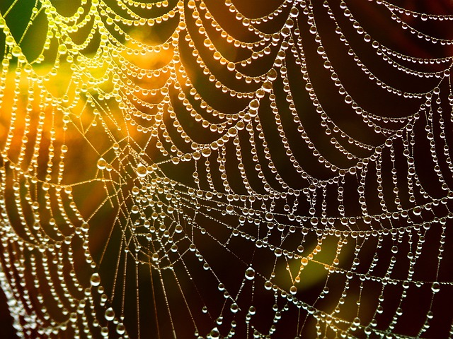 Web, Cobweb, Dewdrop, Drop Of Water, Lichtspiel