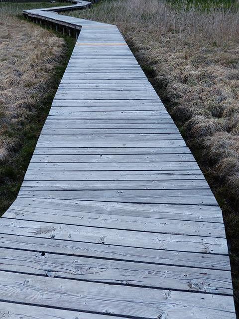 Web, Boardwalk, Moor, Swamp, Moorland