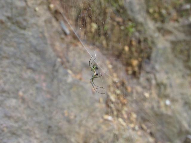 Spider, Jungle, Ecuador, Insect, Web, Network