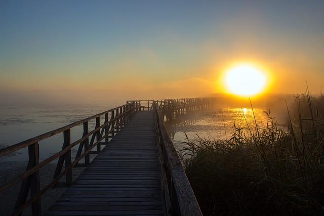 Sunrise, Web, Reed, Nature, Mood, Romantic, Lake