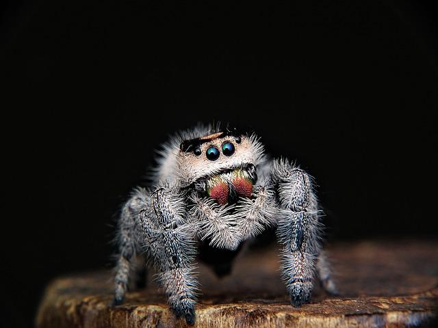 Spider, Jumping, Web, Eyes, Intelligent, Intelligence