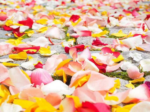 Rose Petals, Petals, Wedding, Red, Love, Scatter Roses