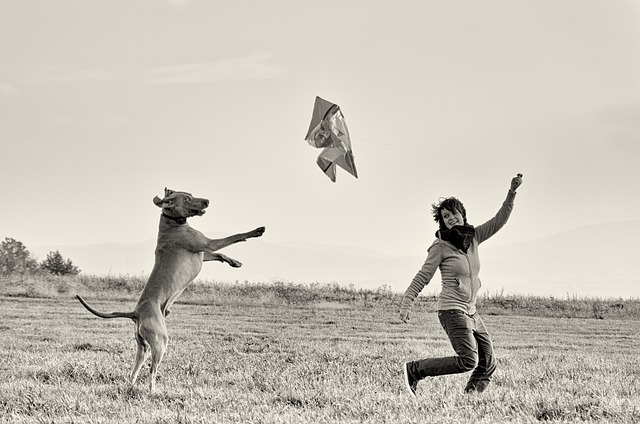 Man And Dog, Standing Dog, Weimaraner, Kite Flying