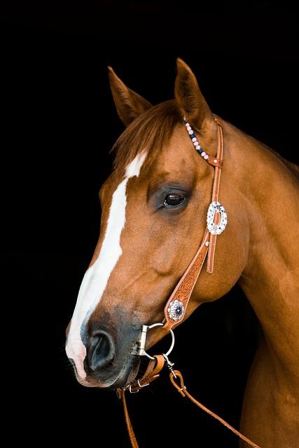 Quarter Horse, Horse, Western, Bridle, Cowgirl, Cowboy