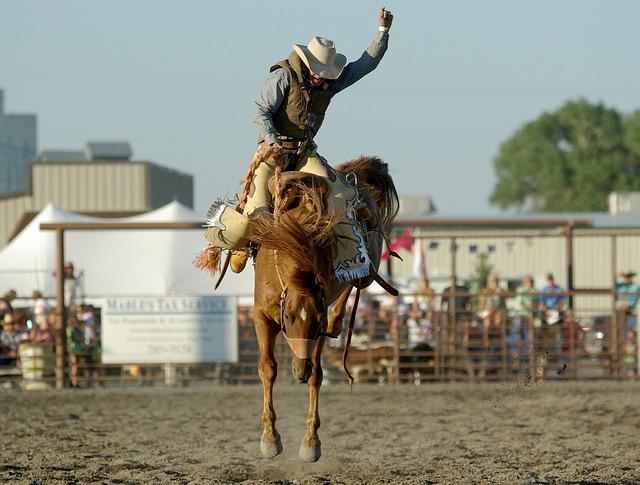 Cowboy, Rodeo, Horse, Bronco, Bucking, Western, Riding