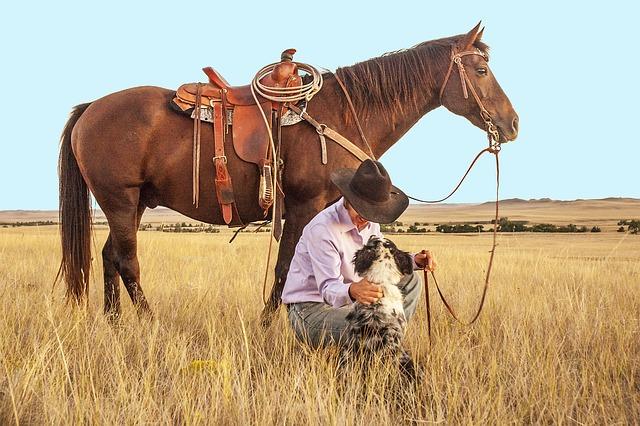 Cowboy, Horse, Dog, Pasture, Western, Ranch, Ranch Land