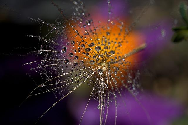 Dandelion, Macro, Drops, Water, Plant, Wet, Coloring