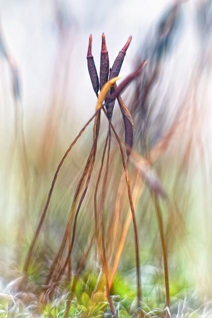 Moss, Seed, Flower, Miniature, Close, Macro, Soil, Wet