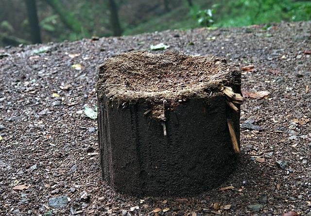 Stump, Tree, Cut, Wood, Chop, Wet, Brown, Seat, Forest