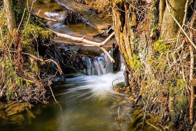Waters, Nature, Wood, River, Leaf, Season, Wet, Moss