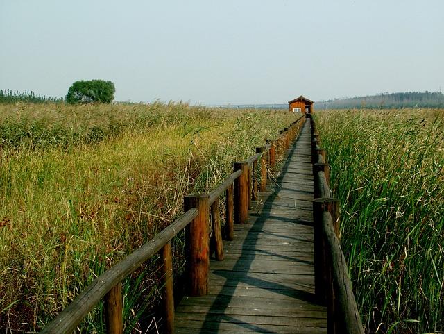 Chen Bridge, Yellow River, Wetlands