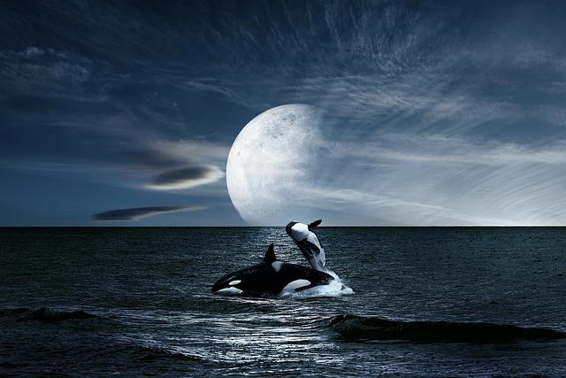 Landscape, Sea, Whales, Sky, Moon, Night, Blue, Marina