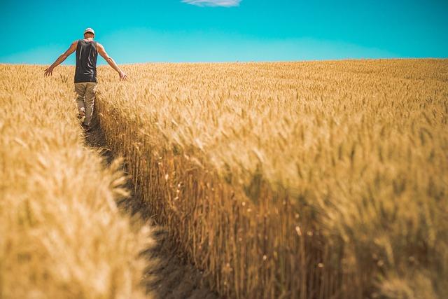 Man, Wheat Crops, Barley, Crops, Cereals, Food, Grains
