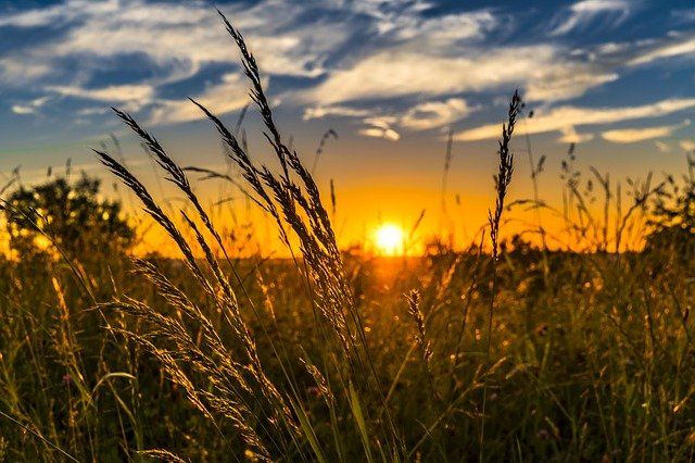 Wheat, Field, Sunset, Backlighting, Wheat Field, Barley