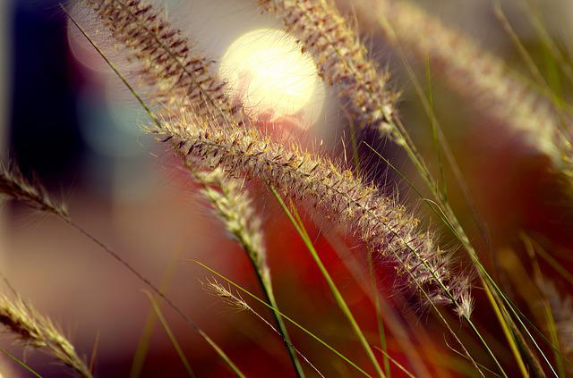 Seed, Nature, Wheat, Growth, Field, Flora, Summer
