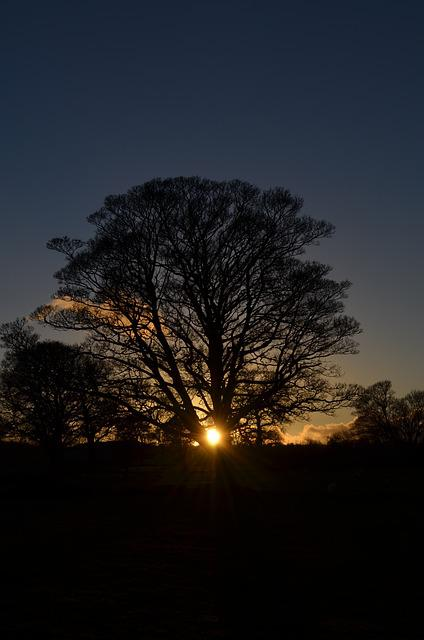 Winter, Solstice, Tree, Sun, Nature, Wheel Of The Year