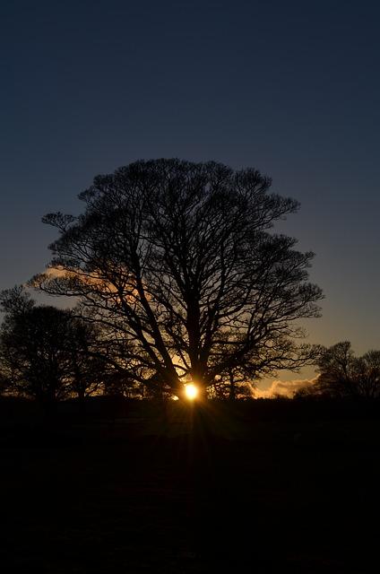 Winter, Solstice, Tree, Sun, Nature, Wheel Of The Year
