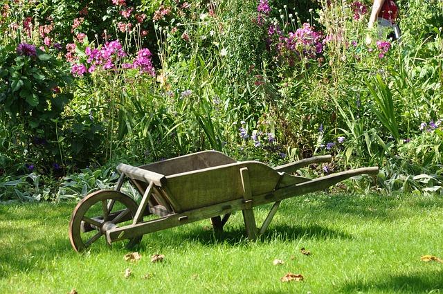 Wheelbarrow, Garden, Vegetable Garden, Gardening, Field