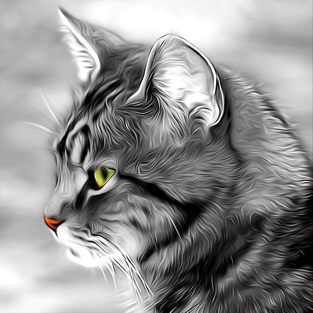 Cat, Expensive, Pets, Portrait, Fur, Cute, Whiskers