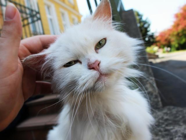 Cat, White Cat, Animal, Street Cat, Cute Cat, Whiskers
