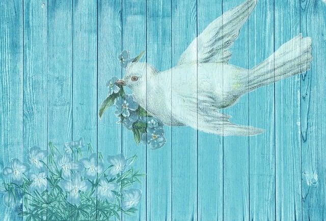 Dove, White Dove, Bird, White, Plumage, Background