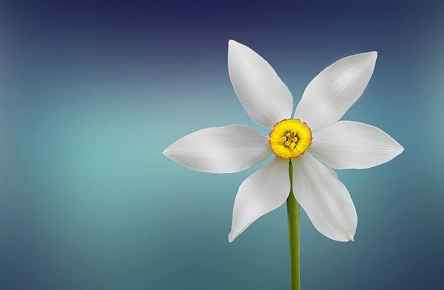 Flower, White, Beautiful, Beauty, Bloom, Blooming