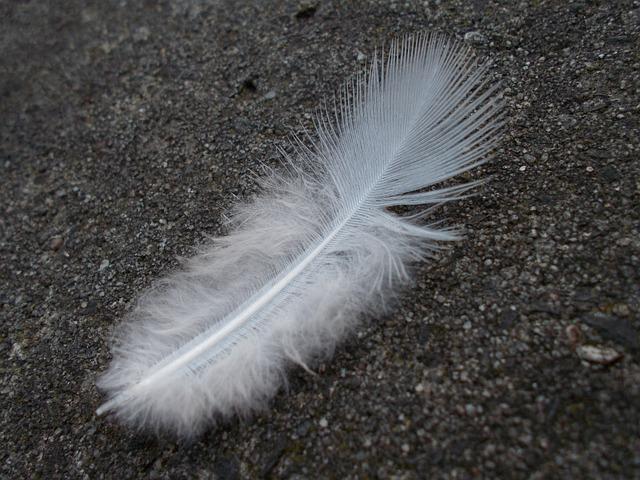 Feather, White, Bird