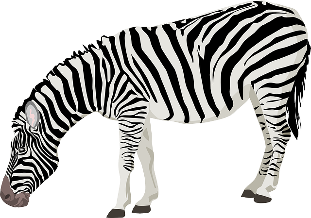 Zebra, Animal, Mammal, Black, White, Stripes, Standing