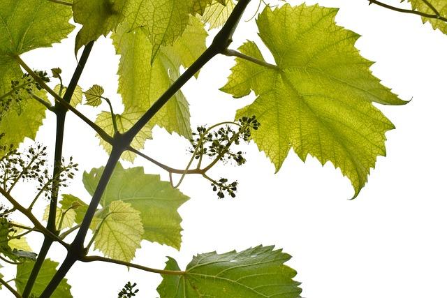 White, Agriculture, Botanical, Branch, Closeup, Farm