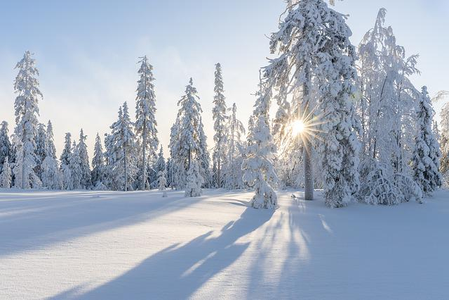 Trees, Winter, Snow, White, Cold, Nature, Landscape