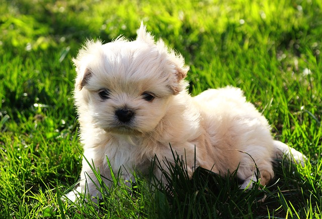 Dog, Pet, White, Nature, Puppy, Nice, Grass, Innocence