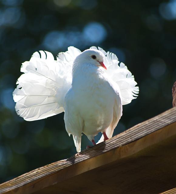 Beautiful Dove, White Dove, Bird, Nature, Animal