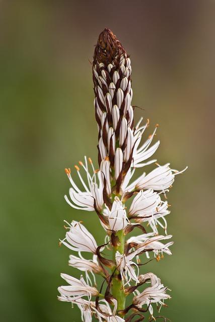 Flowers, Macro, Plant, Flora, White, Green, Nature