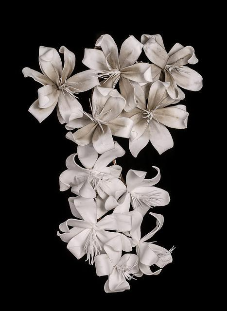 White Flower, Incomplete, Lily